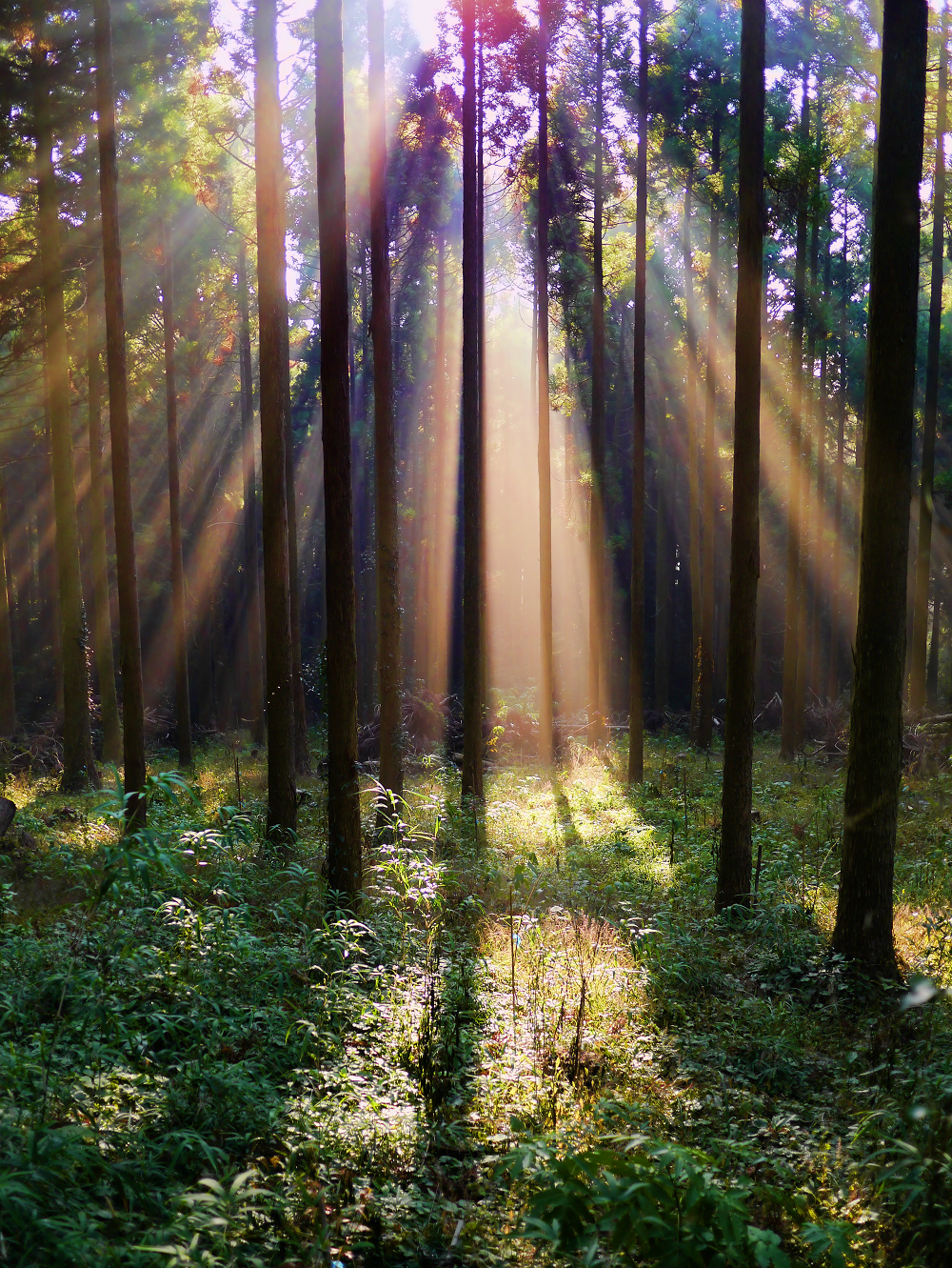 森、木漏れ日、差し込む日