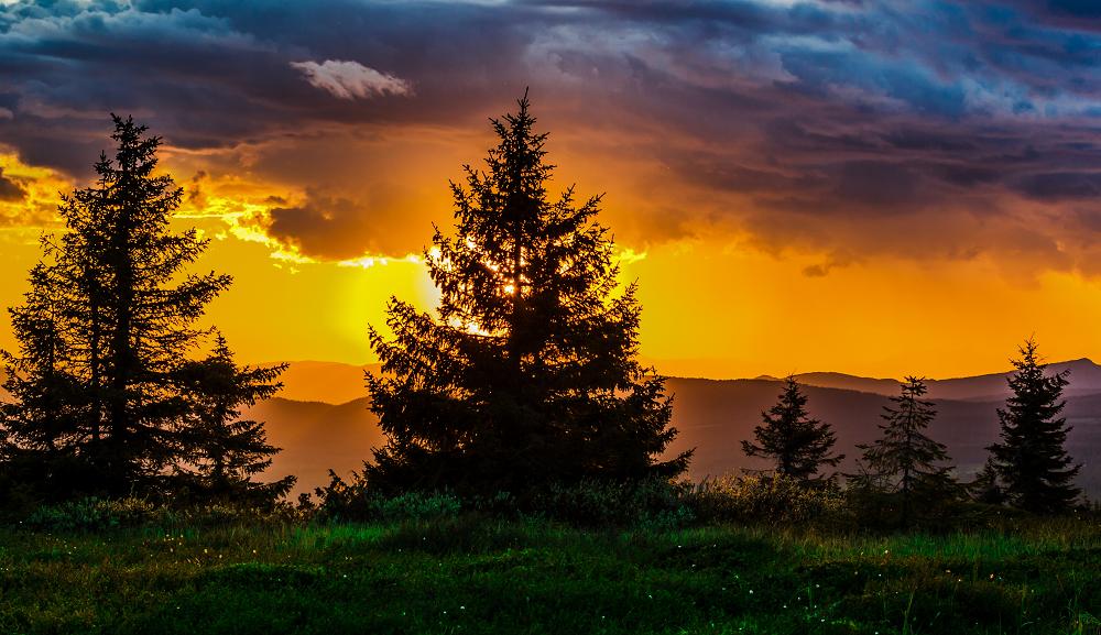 自然、朝焼け、夕焼け、木、空