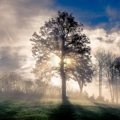 空、木、雲、光