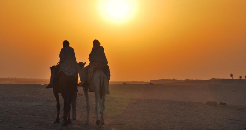 ラクダ、夕日、沙漠