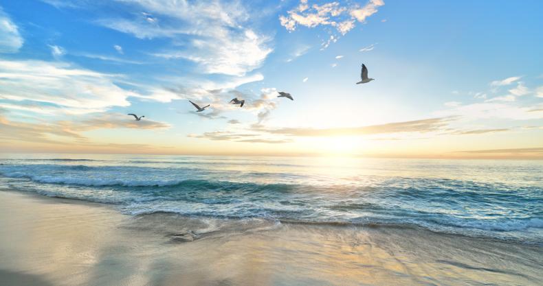 海、太陽、鳥