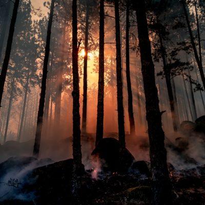 森林、朝焼け