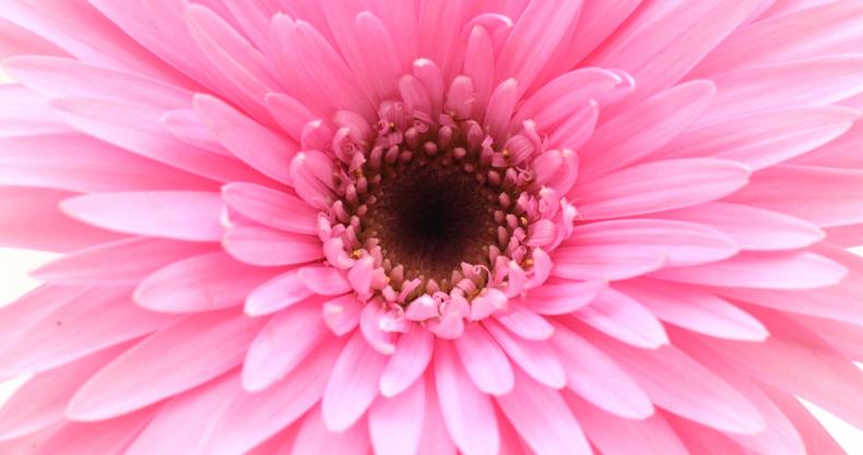 花、ピンク