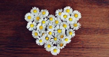 ハートの形に並べられた白い花