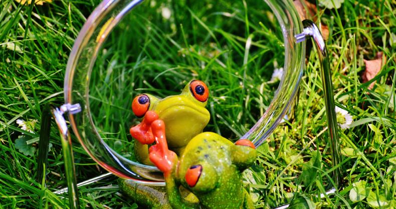 カエルのおもちゃ、鏡