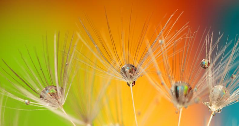 タンポポの種、虹色の背景