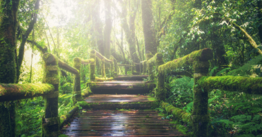 森、木でできた道、コケ