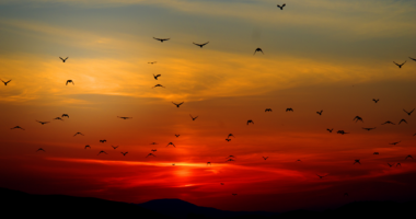 夕焼け、空、鳥