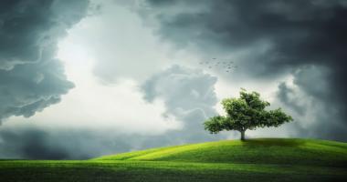 雲、木、草原