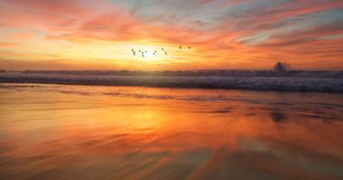 空、夕焼け、鳥