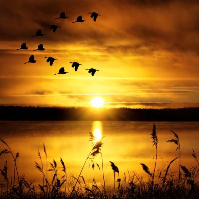 夕暮れ、海、空、鳥、金色