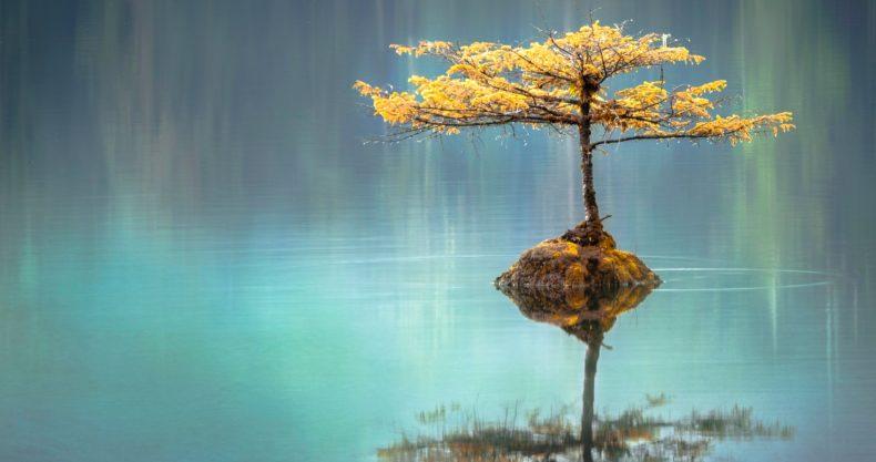 木、湖、反射