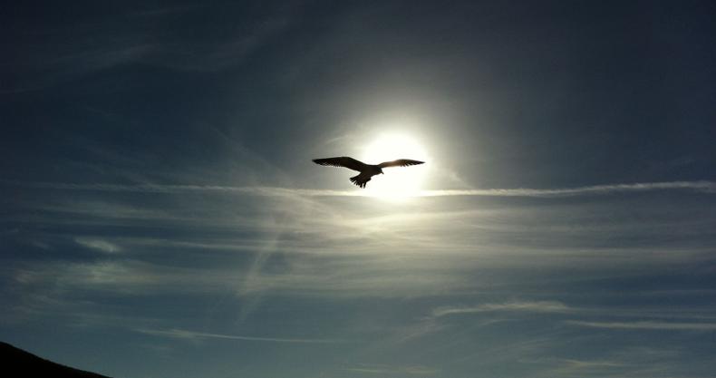鳥、太陽、空