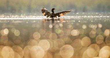 鳥、水、輝き