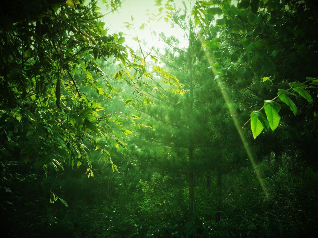 緑、木漏れ日